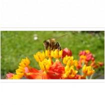 Bienenpatenschaft - klein