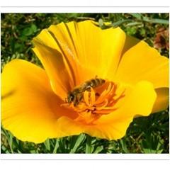 Große Bienenpatenschaft