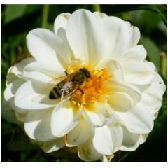 Bienenpatenschaft - mittel