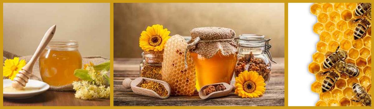 Bester Bio-Honig aus der Imkerei Misthilger